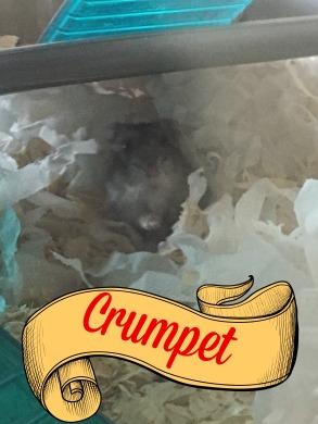 Crumpet.jpg